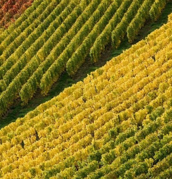Spesialslipp: Burgund