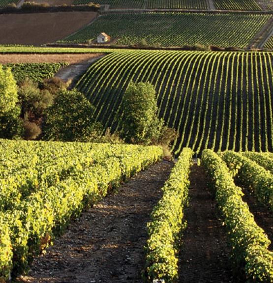 Spesialslipp februar: Burgund 2014