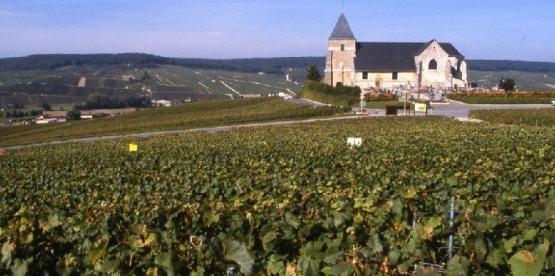 Spesialslipp: Tyskland og Champagne