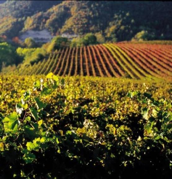 Vinmonopolets nyheter i Mai