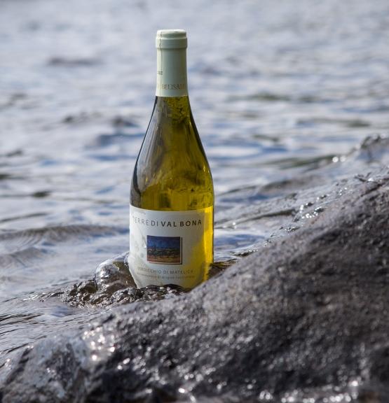 Ukens vin: Belisarios Verdicchio