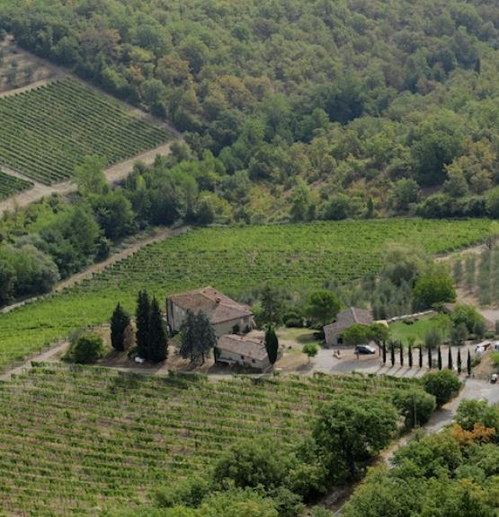 Ukens vin: Klassisk Chianti Classico