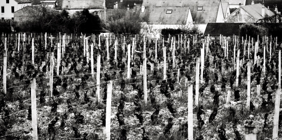 Burgundslippets beste under 450