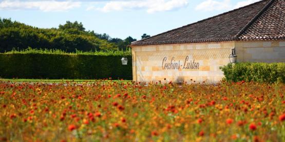 I spesialbutikk: 2010 hvit Bordeaux