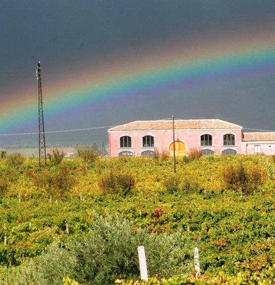 Spesialslipp for italiensk vin